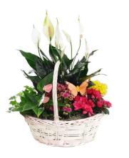 Cesta plantas variadas con flor